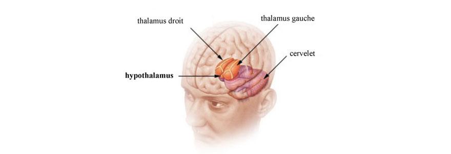Les effets du tabac sur le cerveau